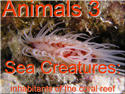 Introductory Words - English - Animals 3, Coral Reef Sea Animals