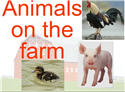 Introductory Words - English - Animals 2, Farm