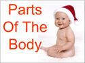 Introductory Words - English - Body Parts