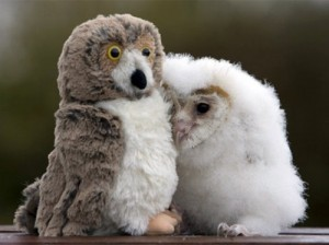 real-owl-with-toy-owl