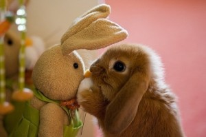 toy-bunny-wth-real-bunny