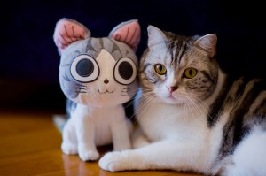 toy-kitty-with-real-kitty